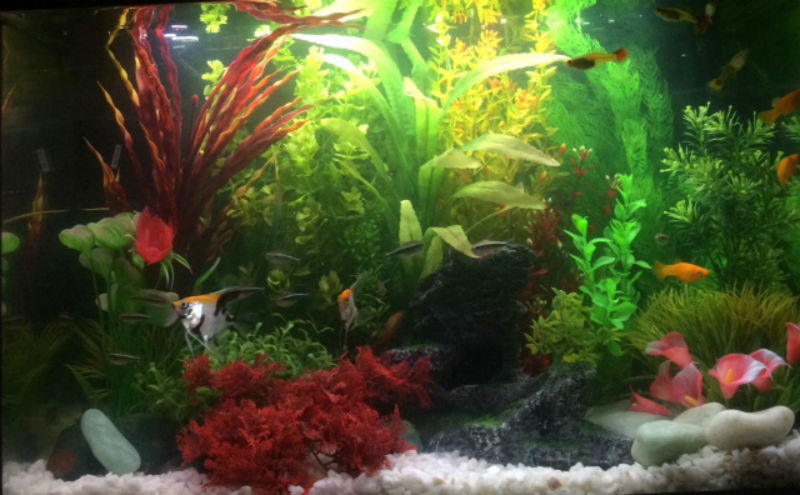 Five Lessons My Autistic Daughter is Learning Through Having a Tropical Fish Tank