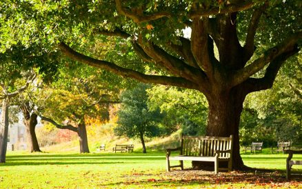 National Trust - A Lovely Family Day Out