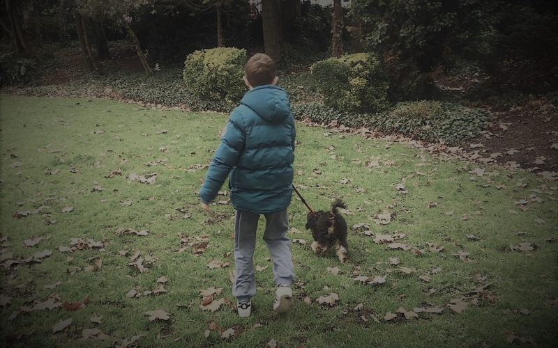 They Call It Puppy Love: What a Dog Has Given Our Family